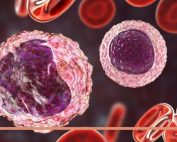Monozyten und Lymphozyten, Credit: Canva
