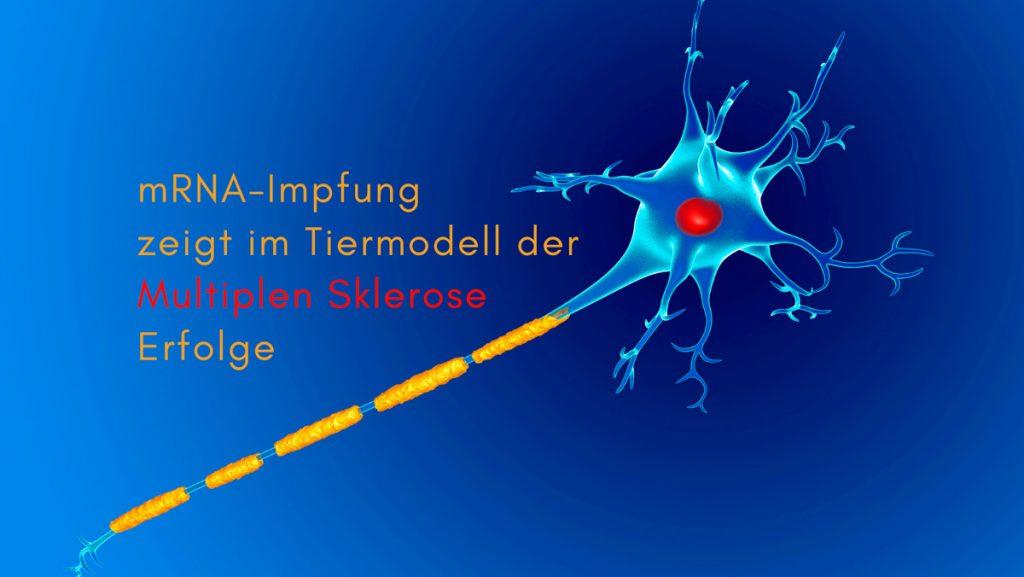 Symbolbild Multiple Sklerose. Text: mRNA-Impfung zeigt in einem Tiermodell der Multiplen Sklerose Erfolge. Credit: Canva